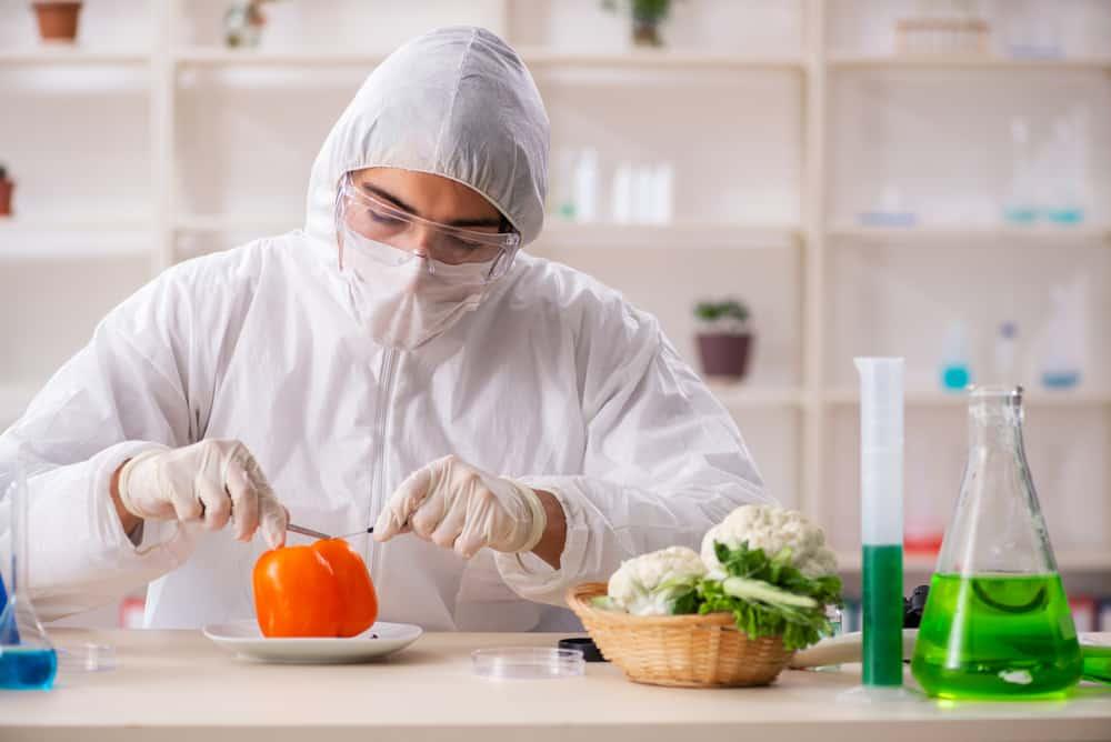 Scientist working in lab on GMO